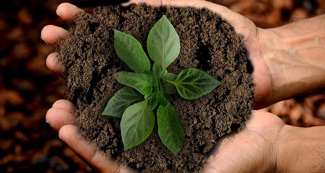 zielona roślinka na dłoniach